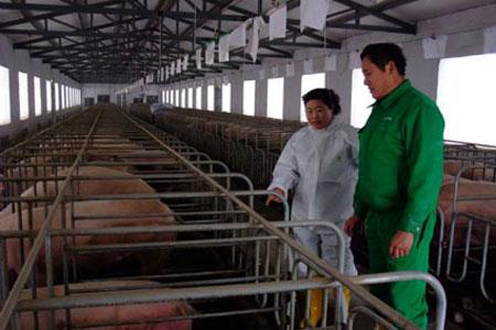 """女""""猪倌""""杨新华致富不忘回报社会20130117085107818.jpg"""